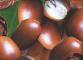 Использование масла Карите (масло Ши)